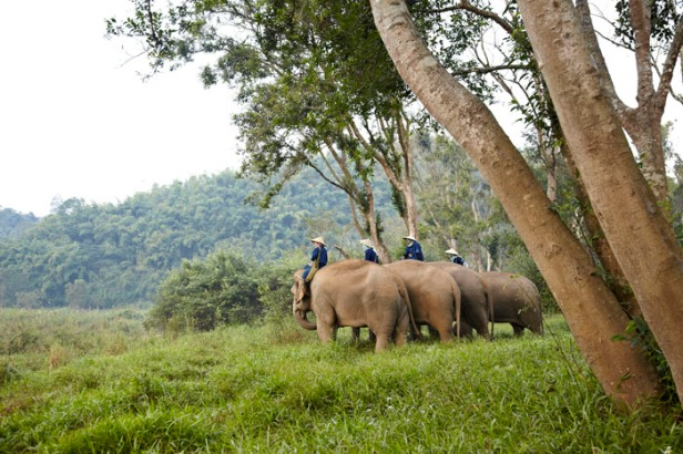 This52746915-H1-Elephant_and_mahout_meeting