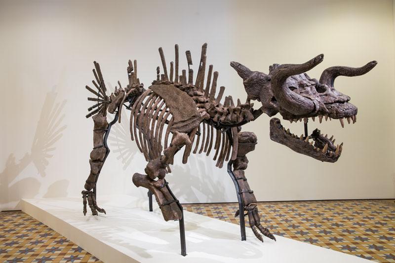 tan-zi-hao_the-skeleton-of-makara-the-myth-of-a-myth_2016_image-courtesy-of-singapore-art-museum_1